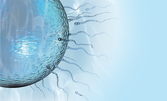 sperm quality Selenium